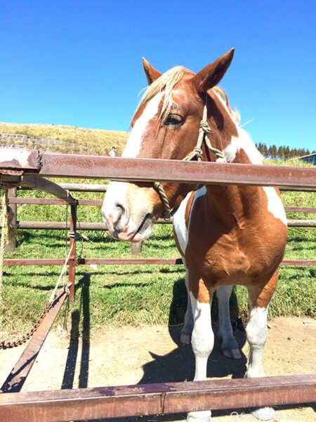 阿蘇草千里 乗馬体験