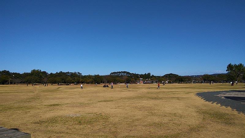 今津運動公園の芝生