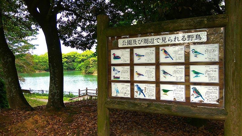 西南杜の湖畔公園の野鳥
