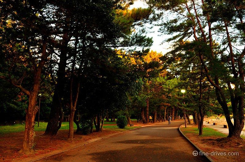 小戸公園の松林