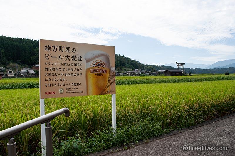緒方産のビール大麦