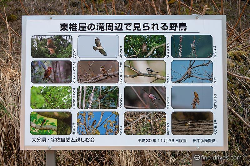 写真 東椎屋の滝周辺で見られる野鳥