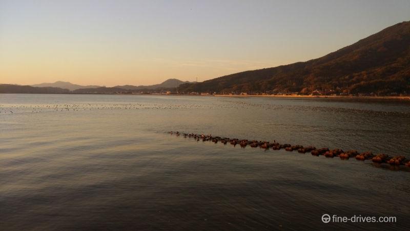 船越湾の野鳥の群れ